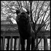 The lion of Berlin (?) (irgendwiejuna) Tags: lion statue nopeople yashica yashica635 ilford ilfordhp5 hp5 120mm 6x6 blackandwhite berlin museumsisland mediumformat selfdeveloped caffenol caffenolcl
