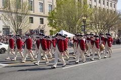 2018 National Cherry Blossom Parade  (456) U.S. Army Old  Guard (smata2) Tags: military washingtondc dc nationscapital cherryblossomfestival cherryblossomfestivalparade parade oldguard fifeanddrumcorps