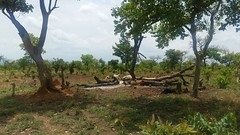 IMG-20180317-WA0008 (FAO Forestry) Tags: fao un uganda refugees unhcr world bank environment energy south sudan woodfuel forestry