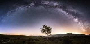 Lone Tree Under Dark Skies