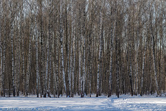 2018-03-19-08-37-18-7D2_3995 (tsup_tuck) Tags: 2018 march moscow spring woods