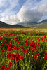 Spring (Paolo Boschetti) Tags: park parco paesaggi landscapes mountain mountains montagna sibillini spring flowers bloom nature italy fioritura castelluccio colors