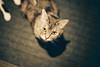 CNV000022 (雅布 重) Tags: f100 nikkor 50mm f14d tudorcolors xlx200 film snap japan tokyo 2018 cat 寵物 貓