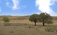 276 Scenic Drive, Adaminaby NSW