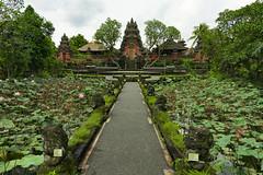 *** (shadobb) Tags: landscape travel bali indonesia asia green