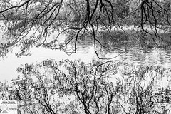 OstPk_DSC8660SEfx (Nick Woods Photography) Tags: landscape water waterscape waterreflections waterscene trees treereflections treebranches mono blackandwhite blackwhite bw bwimage nationaltrust nt winter winterscene osterley osterleypark nationaltrustosterleypark