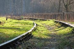 Forest sideway (navarrodave80) Tags: forest rails green grass boardwalk nature ustka poland sunlight canon sx600hs