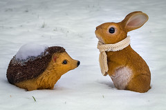 The Hare and the Hedgehog (FocusPocus Photography) Tags: hase igel hare hedgehog osterhase easterbunny bunny tier animal gartendeko gardenornament decoration schnee snow winter