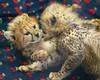 Fuzzy-mania (Penny Hyde) Tags: babyanimal bigcat cheetah cheetahcub cub safaripark