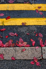 NO PARKING (Rust Never Sleeps) Tags: double yellow lines no parking autumn colours leaves nottingham