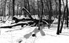 The North Woods _ bw (Joe Josephs: 3,166,284 views - thank you) Tags: centralpark landscape nyc newyorkcity travel travelphotography city citypark cityscape outdoors park urbamexploration urban urbanparks snow cold coldweather snowstom ravinewater stream forest trees meadow bw monochrome blackandwhite blackandwhitephotography