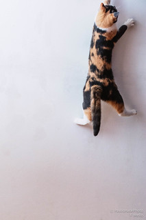 Flying cat on the wall