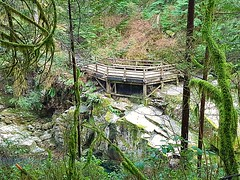 A viewing platform on the river (walneylad) Tags: capilanoriverregionalpark northvancouver westvancouver britishcolumbia canada capilanoriver canyon park parkland urbanpark forest rainforest urbanforest woods woodland evergreen trees branches leaves stump ferns moss logs rocks water trail path green brown sun shade light dark march spring afternoon view nature scenery