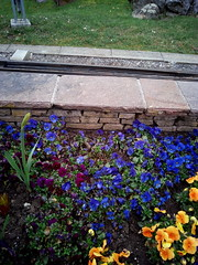 IMG_20180330_154627 (Puntin1969) Tags: telefonino fiori aiuola ilaria svizzera cantonvallese parco parc trenino treni vapore