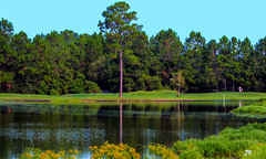 Golf DSC_0024 (Mike Pesseackey aka UAGUY1) Tags: golf florida trees water lakes outdoors pines flora color photoshop nikon nature