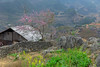 _J5K1918.0218.Mèo Vạc.Hà Giang. (hoanglongphoto) Tags: asia asian vietnam northvietnam northeastvietnam landscape scenery vietnamlandscape vietnamscenery vietnamscene hagianglandscape spring peachblossom house home tree rock flanksmountain hdr canon canoneos1dsmarkiii canonef2470mmf28liiusm đôngbắc hàgiang mèovạc phongcảnh phongcảnhhàgiang hàgiangmùaxuân hoađào hoacải ngôinhà sườnnúi hàngràođá stonefence