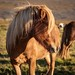 Horses_170918_0709