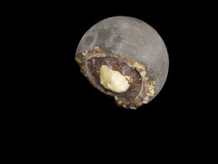 Moon and Ferrero Rocher (ChongBT) Tags: moon candy composite hazelnut ferrero rocher chocolate lunar astro space night funny food treats joke