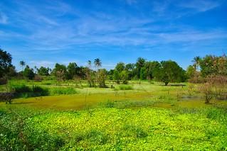 Wetlands on Koh Kret island in the Chao Phraya river near Bangkok, Thailand