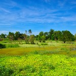 Wetlands on Koh Kret island in the Chao Phraya river near Bangkok, Thailand thumbnail