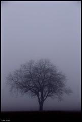 Mayet (Sarthe) (gondardphilippe) Tags: mayet sarthe maine paysdelaloire arbre tree brume brouillard fog nature ciel campagne champ extérieur field landscape monochrome paysage quiet rural sky texture zen sundaylights