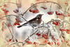 THRUSH (kvl23) Tags: thrush mountainash bird snow frost winter nature berries arkhangelsk russia