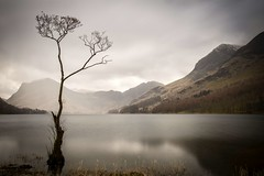 'Lonely Tree'....[Explore] (Taken By Me Photography) Tags: takenbyme takenbymephotography tree trees scene scenic outside outdoors mountain mountains clouds cloud hill hills nikon d750 cumbria buttermere lake lakes north dull rain cold weather