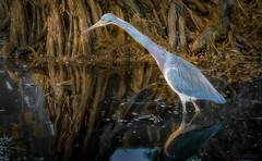 Enchanting Light of Morn (JDS Fine Art Photography) Tags: heron lake sunrise morn morning egret nature beauty naturesbeauty reflections