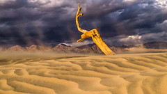Summoning the Forces (carolina_sky) Tags: deathvalleynationalpark mesquitedunes badwater furnacecreek sandstorm wind stormclouds sandy dead tree funeralmountains desert dunes drifting branch light beams shafts pentaxk1 pentax2470mm skymatthewsphotography