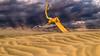 Summoning the Forces (carolina_sky) Tags: deathvalleynationalpark mesquitedunes badwater furnacecreek sandstorm wind stormclouds sandy dead tree funeralmountains desert dunes drifting branch light beams shafts pentaxk1 pentax2470mm skymatthewsphotography