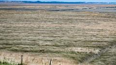 Langeoog im Frühling - Inselimpressionen-8745 (clickraa) Tags: langeoog insel impressionen