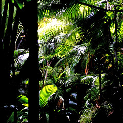Praslin, Seychelles (pom'.) Tags: canoneos400ddigital february 2008 graniticseychelles 100 forest africa praslin seychelles lush palmtree palmtrees innerislands baiesainteanne grandanse island indianocean green 200 300 5000