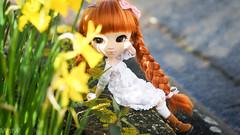 Rayon de Soleil (MintyP.) Tags: pullip doll fc ana anastasia viviane poupée light obitsu24 wig animaleyes photography sonynex sony nex 6 mintyp