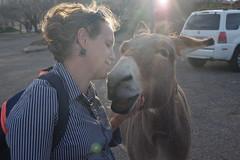 Keri and Burro (EllenJo) Tags: clarkdalearizona clarkdaleburros clarkdaleaz az arizona smalltownlife burros donkeys verdecanyonrailroaddepot ellenjo pentaxks1 march16 2018