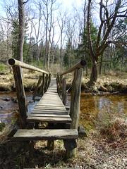 bridge (francesca.clemente) Tags: roetgen hike plezierwandeling21 belgium germany trekking nature toad frog tree narcisus spring hogevenen venen hautesfagnes highfens hohesvenn nationalpark