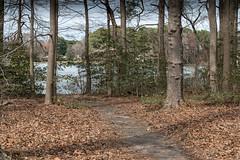 Enchanted Forest 4 NBG (Puddin Tain) Tags: forest norfolkbotanicalgarden norfolkvirginia enchantedforest