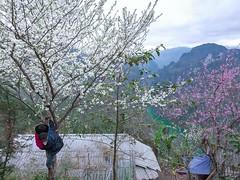 Pải lủng mèo vạc hà giang (HADAOPHOTO) Tags: mèovạc hàgiang hoamận flower spring mountain sôngnhoquế landscapes canon1dsmarkiii canon100400mmf4556