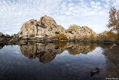 Joshua Tree Mirror (isaac.borrego) Tags: california joshuatree nationalpark desert