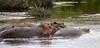 IMG_3140 (SusanKurilla) Tags: wildlife africa kenya tanzania wild safari adventure