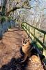 Dexter and Pals (Glesgaloon) Tags: dexter alsatian germanshepherd dogs german shepherd dog