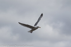 IMG_1302 (fbergess) Tags: bikes birds cars dogs jet otp people planes r44 tumwater washington unitedstates us