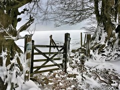 Quantock gate (OutdoorMonkey) Tags: gate gateway fence field tree trees snow winter cold ice frost quantocks quantockhills somerset hilltop countryside rural outside outdoor
