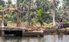 By the Kerala Backwaters (amanda & allan) Tags: india alleppey kerala riceboat riceboats palmtrees palms backwaters veniceoftheeast