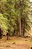 Echo Creek, Banff (aud.watson) Tags: canada alberta canadianrockies albertasrockies banffnationalpark banff vermilionlakes lake lakes water marsh swamp grass reeds forest wood trees tree conifers pines pine spruce larch echocreek ca