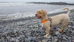 Lima - Costa Verde (Santiago Stucchi Portocarrero) Tags: lima perú santiagostucchiportocarrero miraflores roni perro cane can dog chien hound hund costaverde