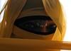 Lichtspiel Teil 3 (Fia by Marv) Tags: niqab woman eyes verhüllt veil veiled verschleiert augen oriental tücher schleier frau portrait sari scarf colour kopfschmuck hijab chiffon schal femme mujer donna ojos yeux occhi voile velo vividstriking