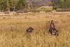 Boy on Waterbuffalo (David Mulder) Tags: myanmar burma nyaungshwe shanstate myanmarburma iso31662mm waterbuffalo animal wild