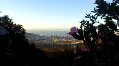 Hiking down (rjmiller1807) Tags: hiking hike down tablemountain platteklipgorge olympustough olympustg4 capetown westerncape southafrica flowers view city sea nature scenery 2017 august outdoors scenic scene
