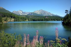 Slovakia, High Tatras (majka44) Tags: slovakia hightatras nature forest grass light colors flower day travel landscape water