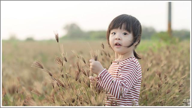 3月台南 親子寫真可以這樣拍 木棉花 蜀葵 小麥 一次讓你拍個夠 (73)